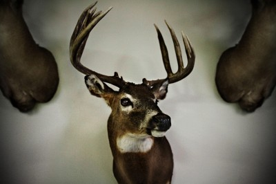 mounted-deer-matt-ogens-photography-portfolio